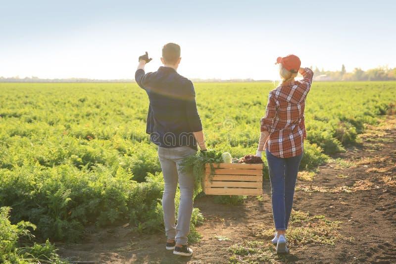 Landbouwers die krat met verzamelde groenten op gebied dragen royalty-vrije stock foto