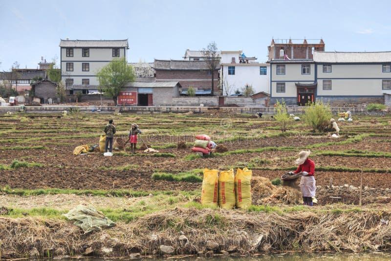 Landbouwers die op de gebieden in Heqing in Yunnan werken stock afbeelding