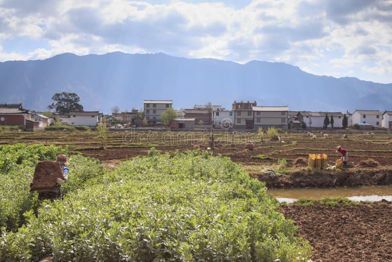 Landbouwers die op de gebieden in Heqing in Yunnan werken royalty-vrije stock fotografie
