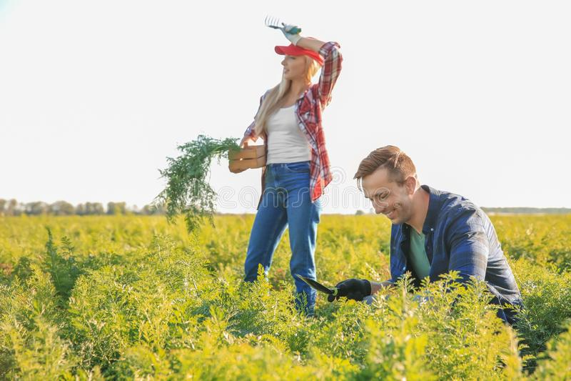Landbouwers die op gebied werken stock afbeelding