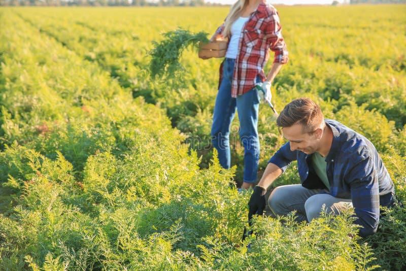 Landbouwers die op gebied werken royalty-vrije stock afbeelding