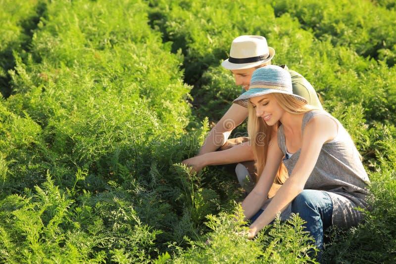 Landbouwers die op gebied op zonnige dag werken royalty-vrije stock foto's
