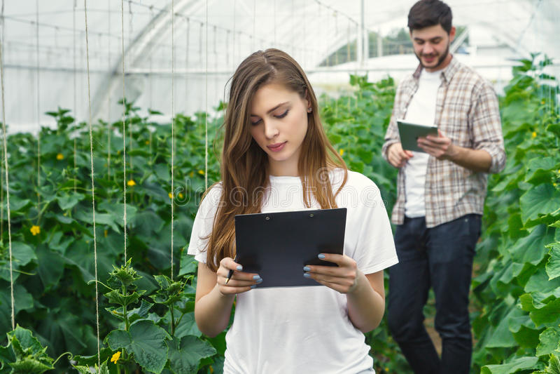 Landbouwers die in serre het groeien groenten werken royalty-vrije stock foto's