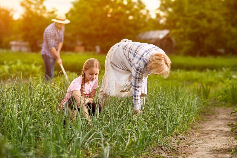 Landbouwers die in tuin werken stock foto