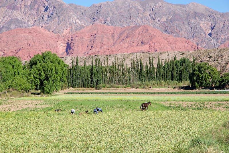 Landbouwers en berglandschap dichtbij Uquia in Jujuy-Provincie, Argentinië royalty-vrije stock afbeeldingen