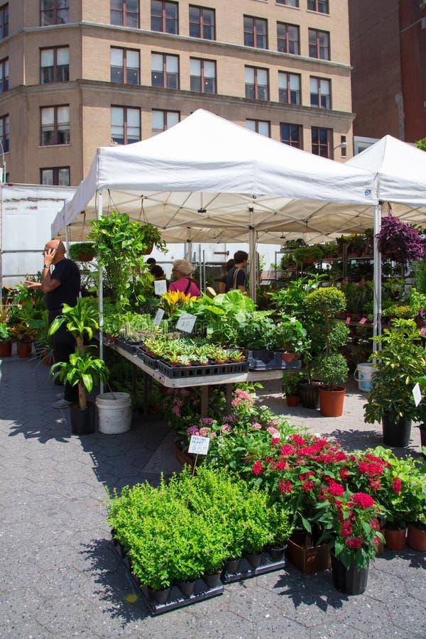Landbouwers Greenmarket NYC royalty-vrije stock foto's