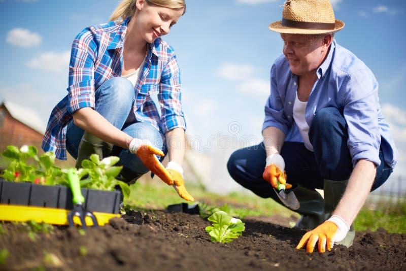 Landbouwers het werken royalty-vrije stock foto's