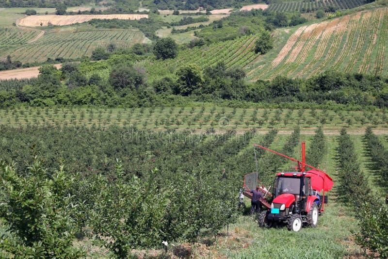 Landbouwers met de boomgaard van de tractorkers stock afbeelding