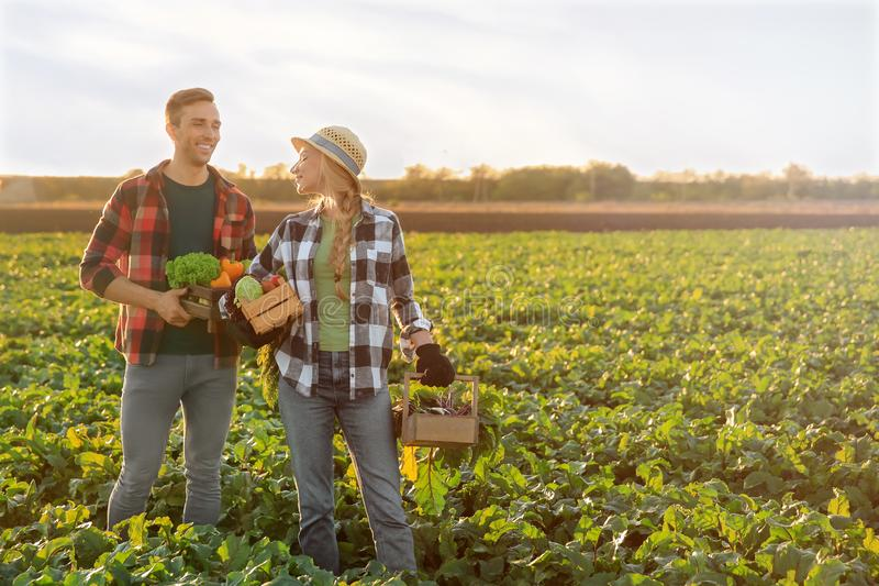 Landbouwers met verzamelde groenten op gebied royalty-vrije stock foto's