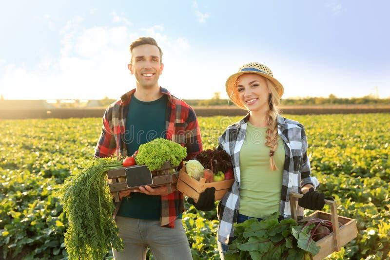 Landbouwers met verzamelde groenten op gebied royalty-vrije stock foto
