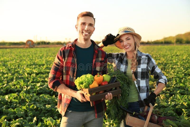 Landbouwers met verzamelde groenten op gebied royalty-vrije stock afbeelding