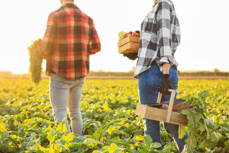 Landbouwers met verzamelde groenten op gebied stock afbeelding