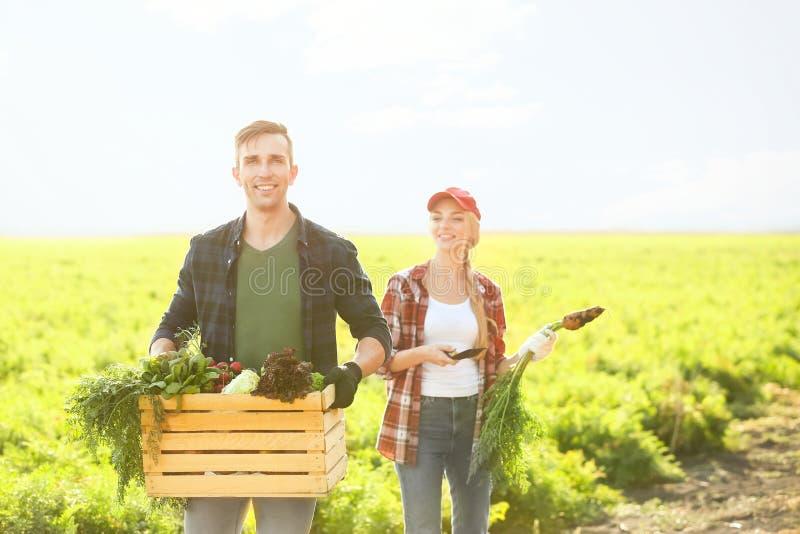 Landbouwers met verzamelde groenten op gebied stock foto's