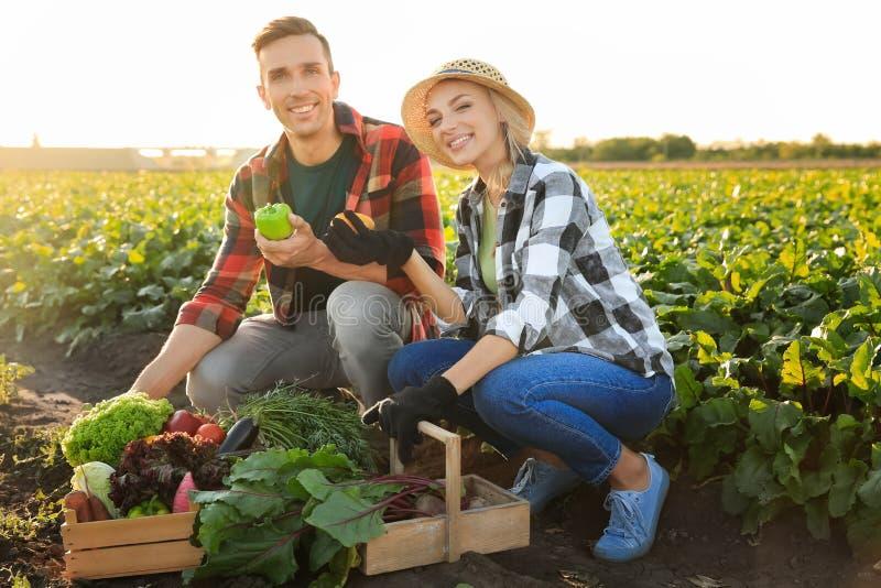 Landbouwers met verzamelde groenten op gebied royalty-vrije stock fotografie