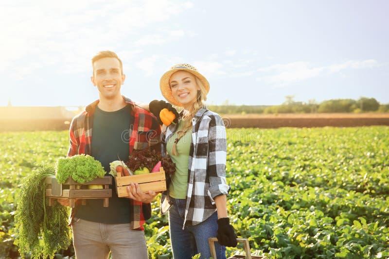 Landbouwers met verzamelde groenten op gebied stock afbeeldingen