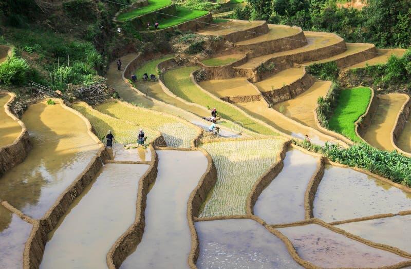 Landbouwers op Terrasvormige padievelden in Vietnam stock fotografie