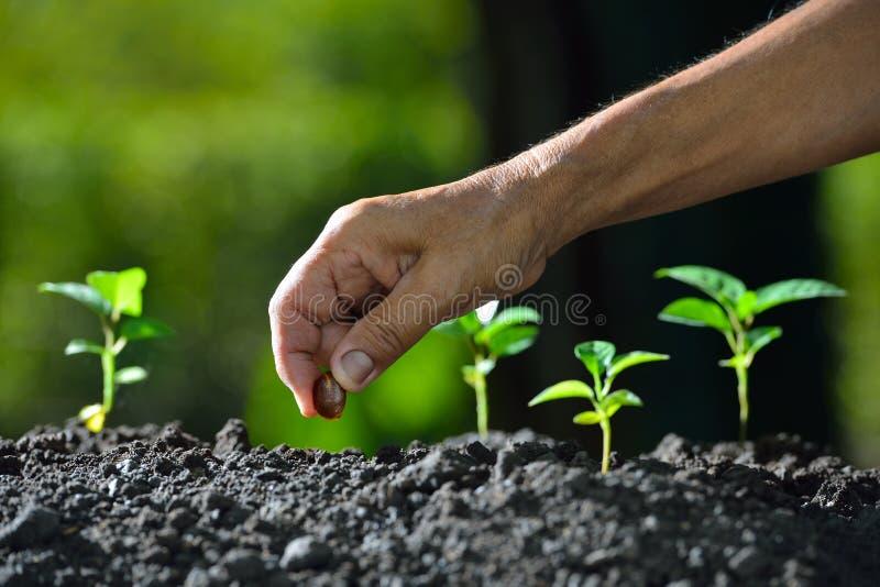 Landbouwers` s hand die een zaad planten stock foto
