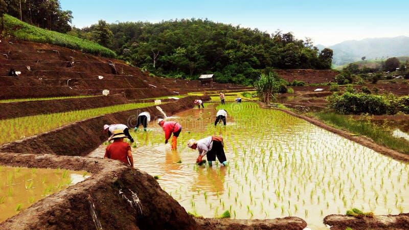 Landbouwers in Thailand stock afbeelding