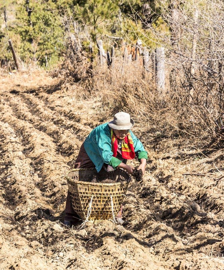 Landbouwers uit Bhutan op het gebied stock afbeelding