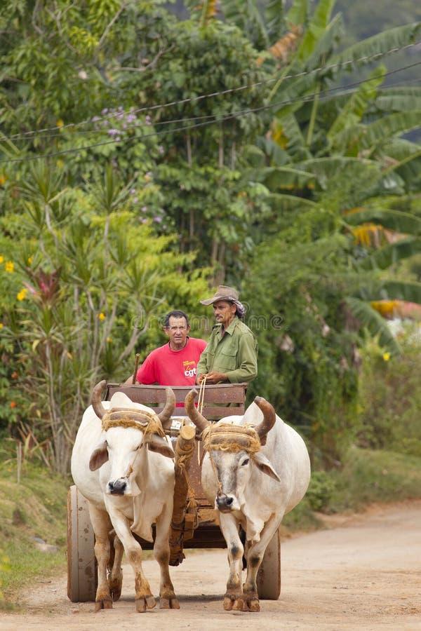 Landbouwers in Vinales royalty-vrije stock afbeeldingen