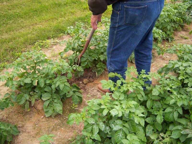 Landbouwers werkend gebied royalty-vrije stock foto