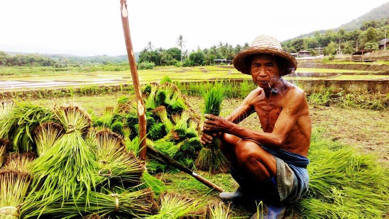 Landbouwersgrijsaard royalty-vrije stock afbeelding