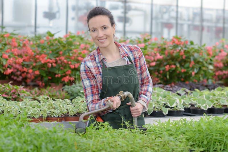 Landbouwersvrouw met het tuinieren hulpmiddel die in tuinserre werken stock foto's