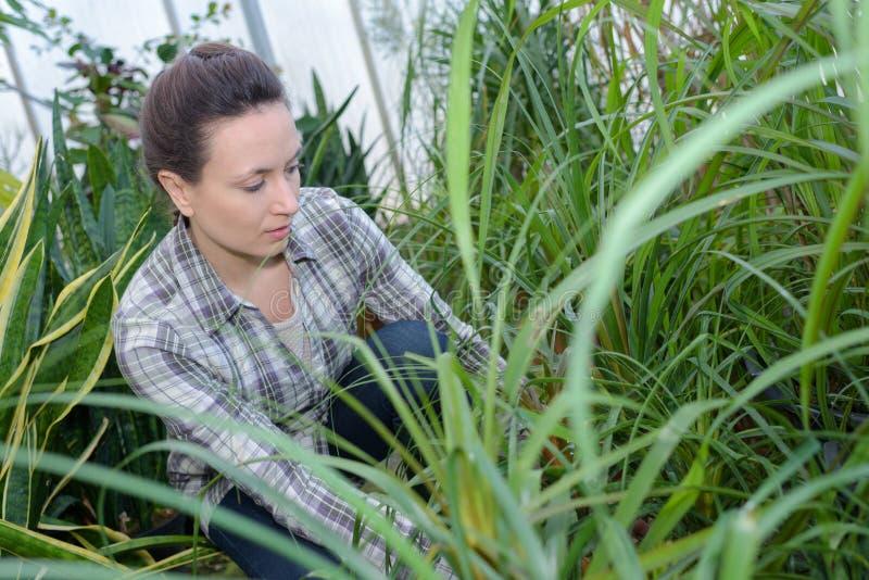 Landbouwersvrouw met het tuinieren hulpmiddel die in tuinserre werken royalty-vrije stock afbeelding