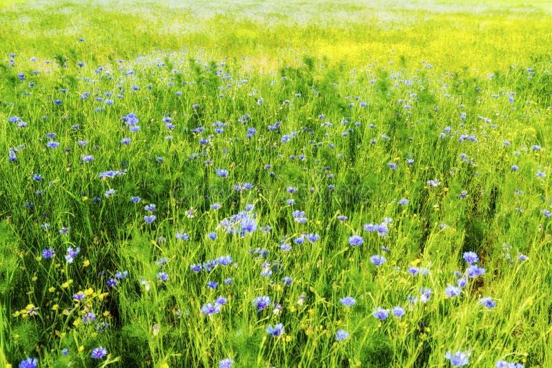 landbouwgebied met blauw en geel stock foto