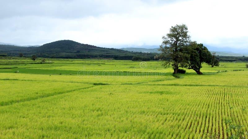 Landbouwgebied met verschillende groene schaduwen stock afbeelding