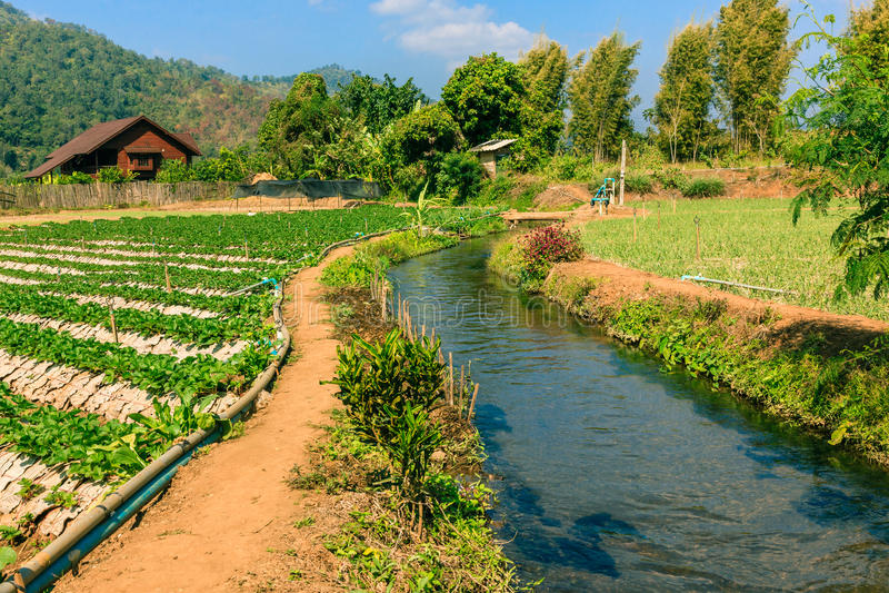 Landbouwgebied van mengelings organisch landbouwbedrijf en irrigatiesysteem stock foto