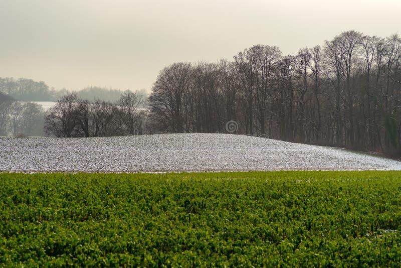 Landbouwgebieden met sneeuw gedeeltelijk worden behandeld die royalty-vrije stock afbeeldingen
