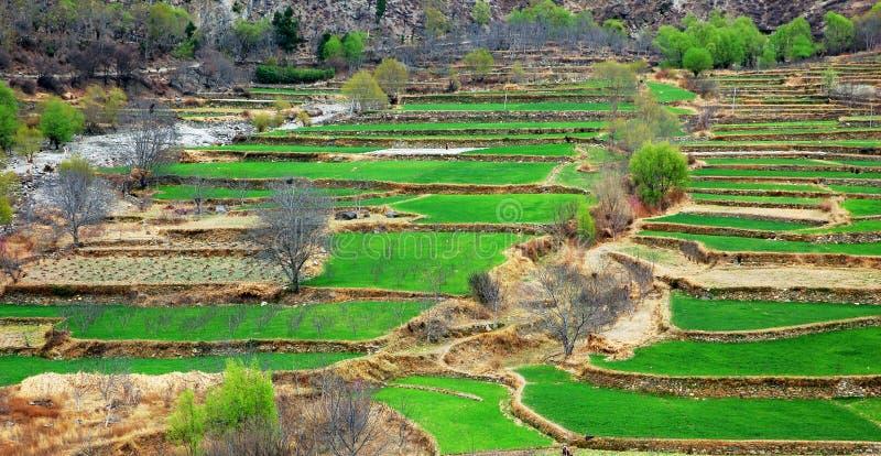 Landbouwgrond stock afbeeldingen