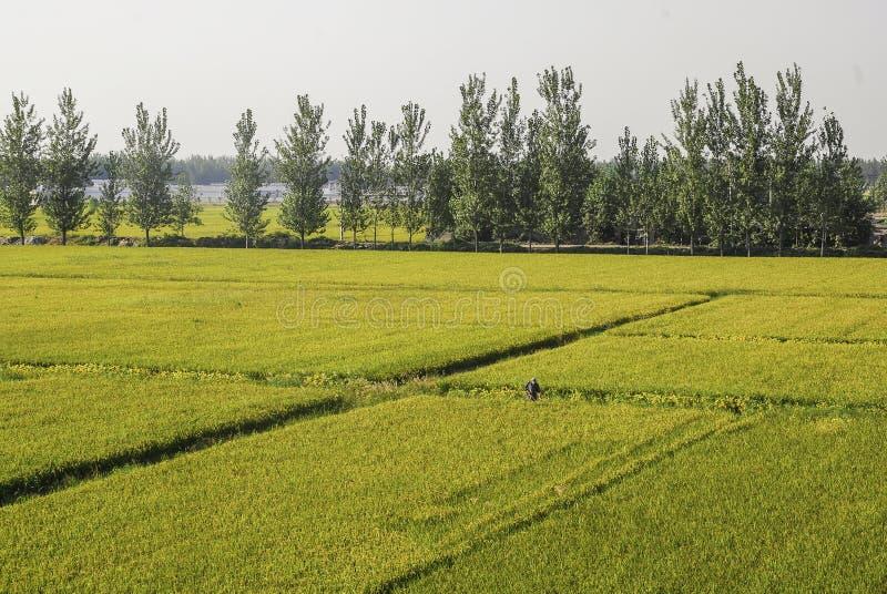 Landbouwgrond royalty-vrije stock afbeelding