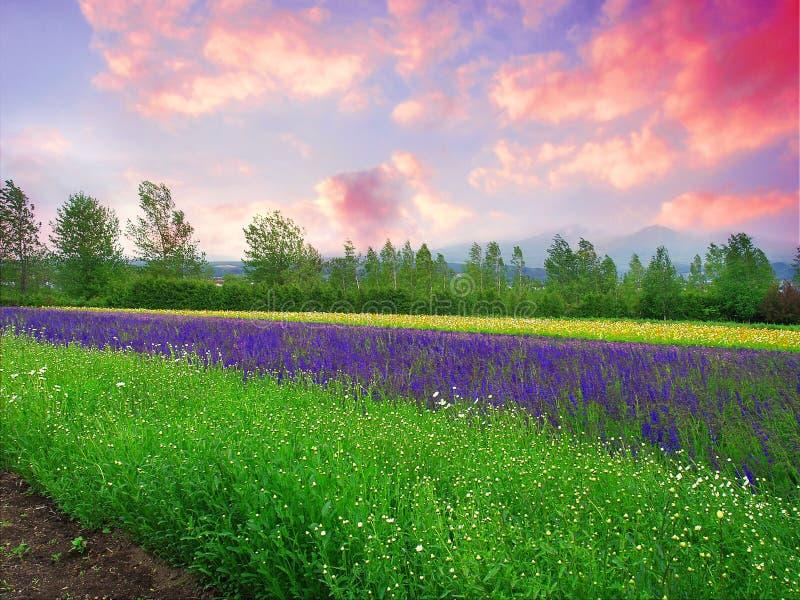 Landbouwgrond stock afbeelding