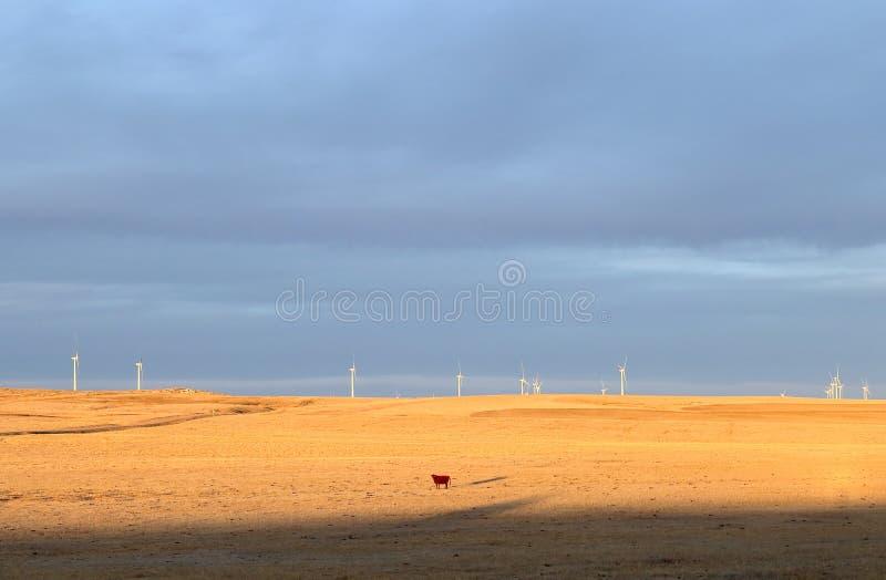 Landbouwgrond met een koe die op weiden en mening van de reusachtige windmolen van windturbines op achtergrond weiden royalty-vrije stock afbeeldingen