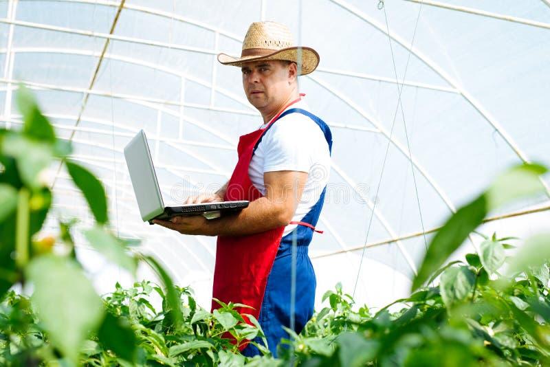 Landbouwingenieur die in de serre werken royalty-vrije stock foto