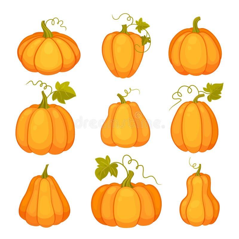 Landbouwinstallatie op witte achtergrond Oranje en gele pompoenen met bladeren en stelen Beeldverhaal vlakke stijl vector illustratie