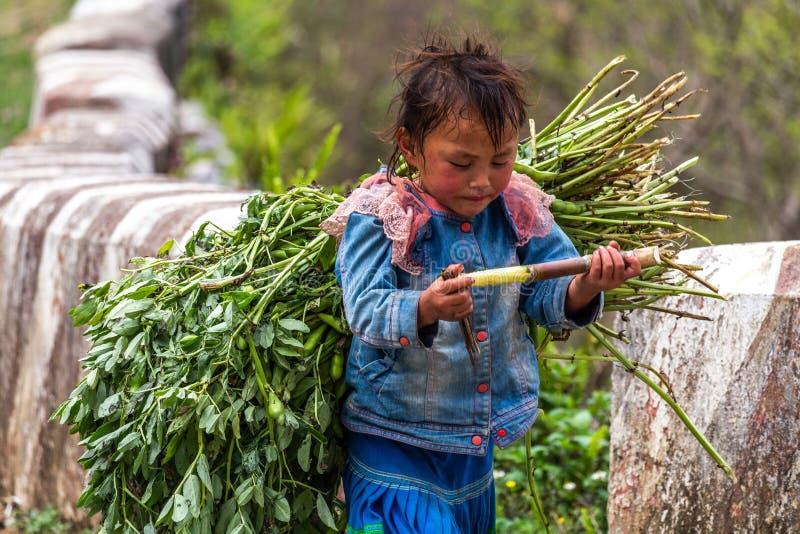 Landbouwkinderarbeid Vietnam royalty-vrije stock afbeelding