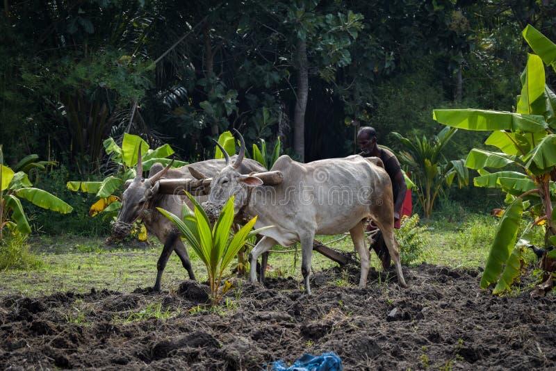 Landbouwlandbouwbedrijf en landbouwer stock afbeelding