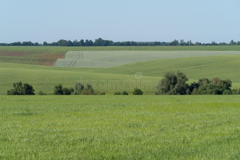 Landbouwlandschap in het gebied van Podolia van de Oekraïne royalty-vrije stock foto