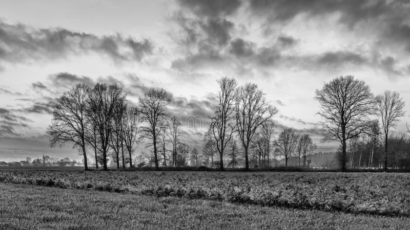 Landbouwlandschap met rij van bomen en een mooie zonsondergang, Weelde, België royalty-vrije stock afbeeldingen