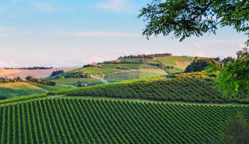 Landbouwlandschap in Toscanië stock afbeelding