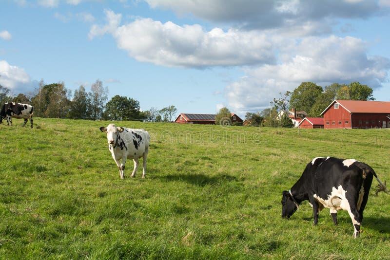 Landbouwlandschap in Zweden royalty-vrije stock afbeelding