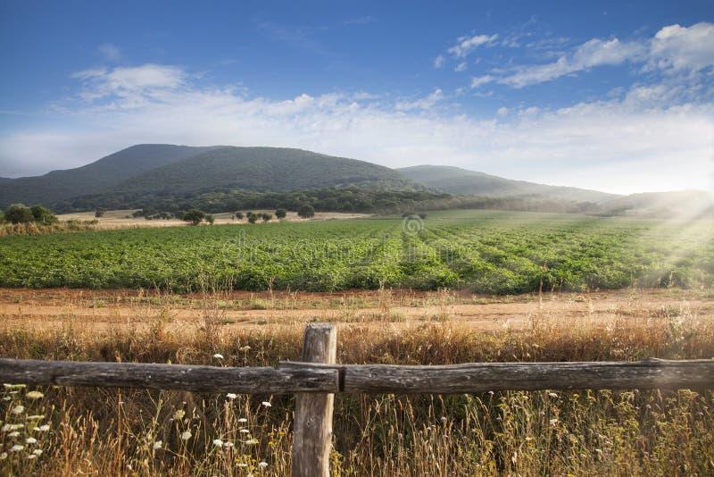 Landbouwplatteland met mooie lichte atmosfeer stock foto