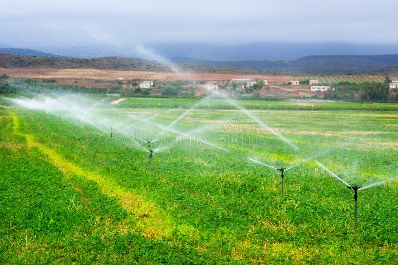 Landbouwsproeiers die op een gebied water geven, royalty-vrije stock foto's