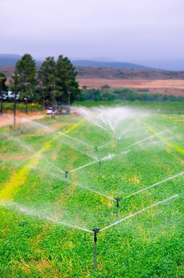 Landbouwsproeiers die op een gebied water geven, stock foto's
