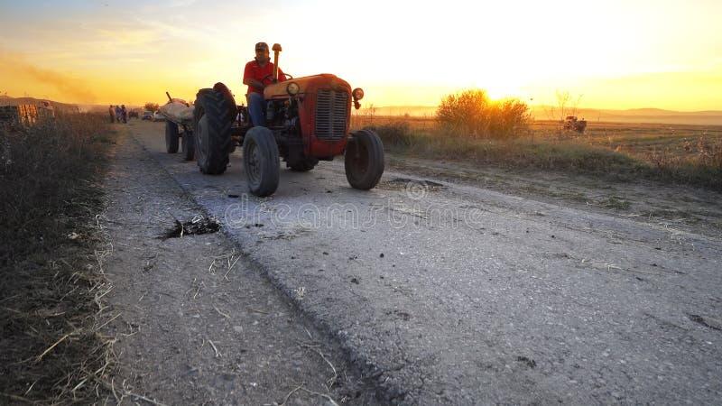 Landbouwtrekker die geoogste gewassen op landelijke weg vervoeren tegen zonsondergang stock afbeelding