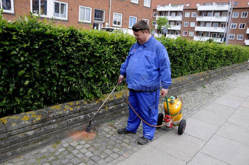 LANDCAPE BURING BUSHES AND LANTS. Copenhagen /Denmark - 13 June 2017. Landscaper buring bushes and plants . Photo.Francis Joseph Dean/Deanpictures stock photo