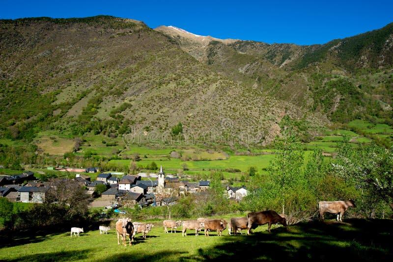 Landcape com uma vila, as vacas e as montanhas nos Pyrenees imagem de stock royalty free